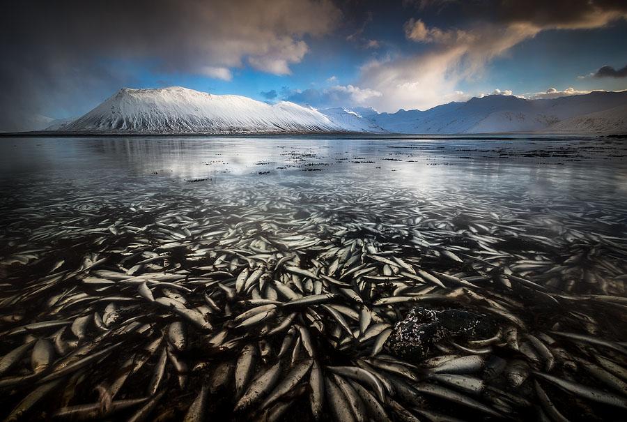 'Watery Grave', Grundarfjörður, February 2013