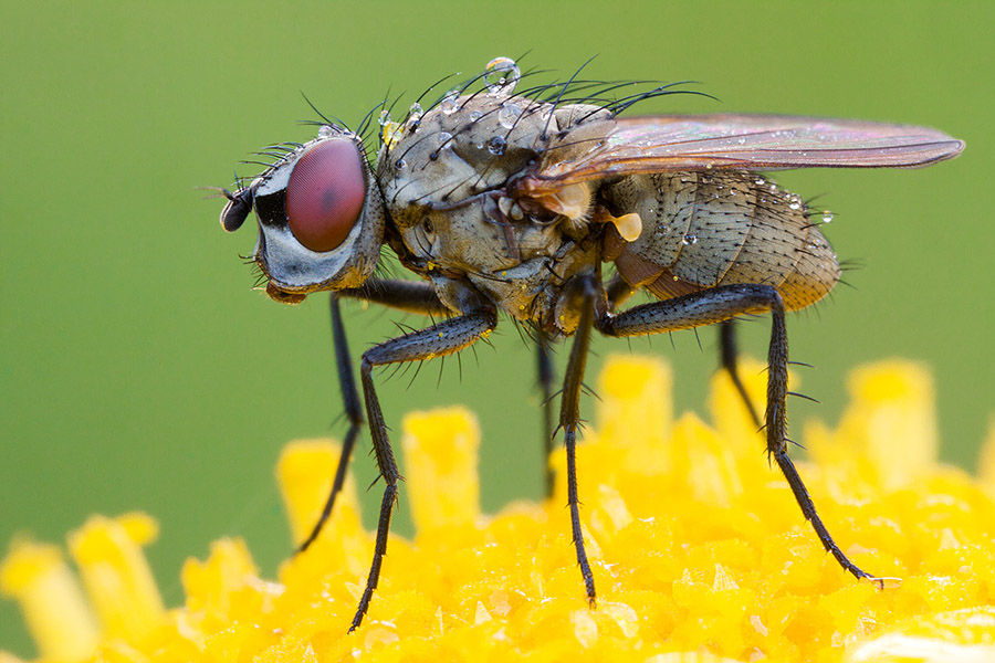 A fly shot from the side. All important parts are in focus, even though DOF is extremely shallow.