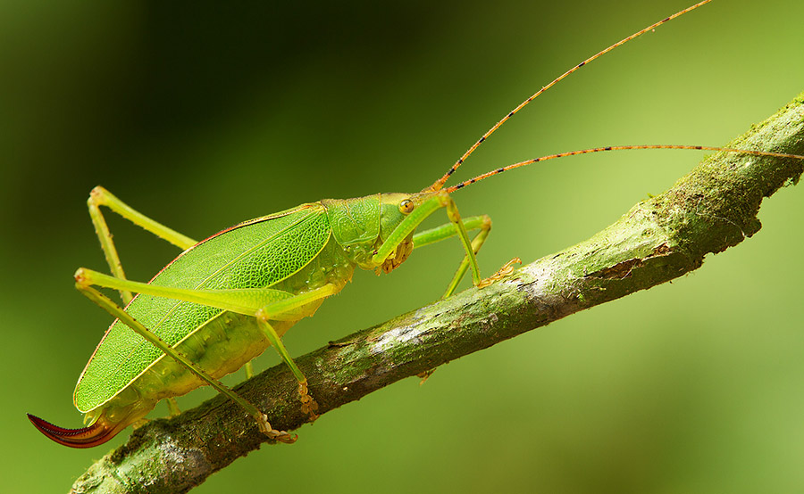 The branch crosses the frame under the corner-to-corner diagonal, to balance the katydid's presence.