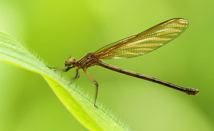 A better balanced damselfly shot. There is enough lead room relatively to the subject's shape.