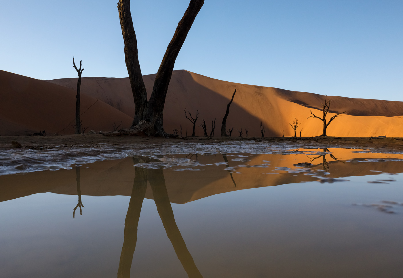 The dead camel thorn trees of Deadvlei reflecting in rainwater. The puddle was actually tiny, and to get the image to look like this I had to shoot at water level, getting mud all over the bottom of my camera.