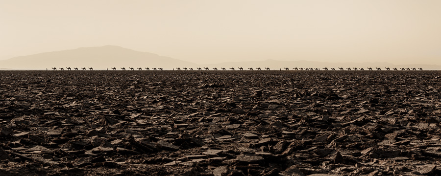 This was just a part of a longer salt caravan on its way back to the Afar region. Canon 5D Mark III, Canon 70-300mm F4-5.6L IS