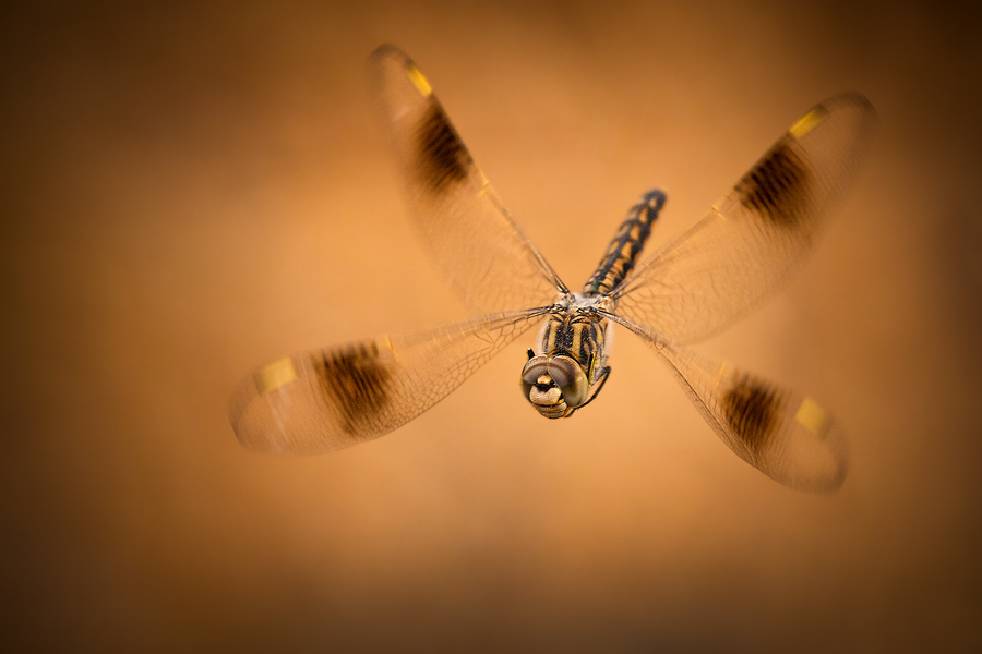 A dragonfly hovering in midair- a very close and exciting encounter of the third kind!