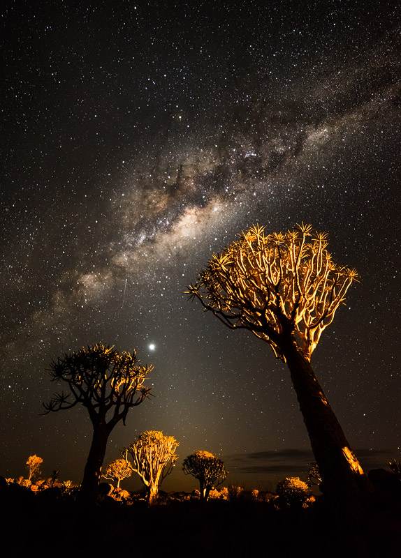 'Phototaxis', Quiver Tree Forest, Namibia, March 2014. The Milky Way seems to attract the trees, thus made a critical element of the image.