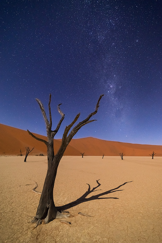 'Dark Sentinel', Deadvlei, Namibia, March 2014