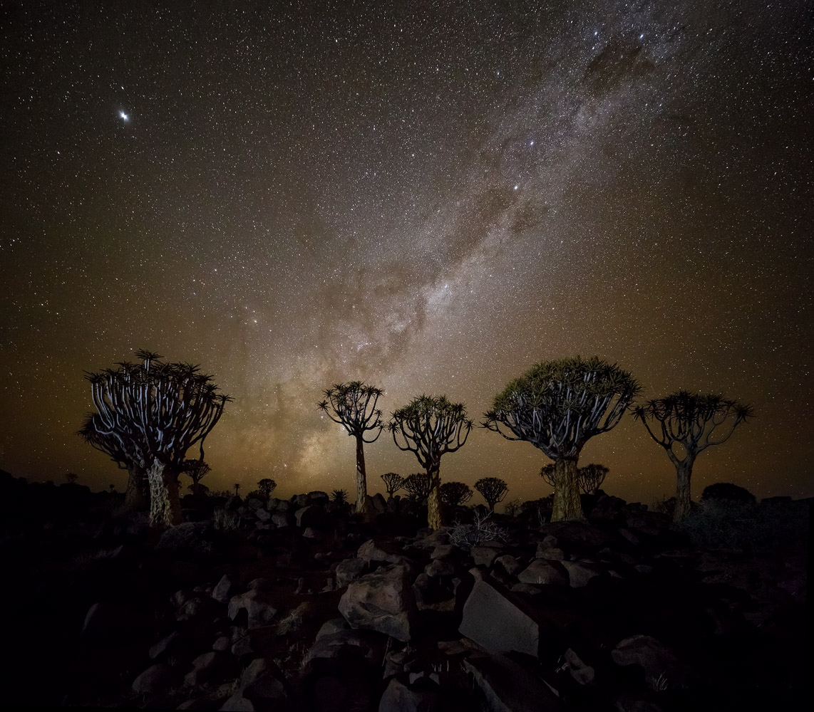 Quiver Tree Forest is a great location for night photography