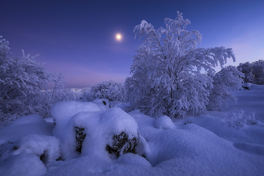 Snow turns the trees into magical, snow-laden spectacles