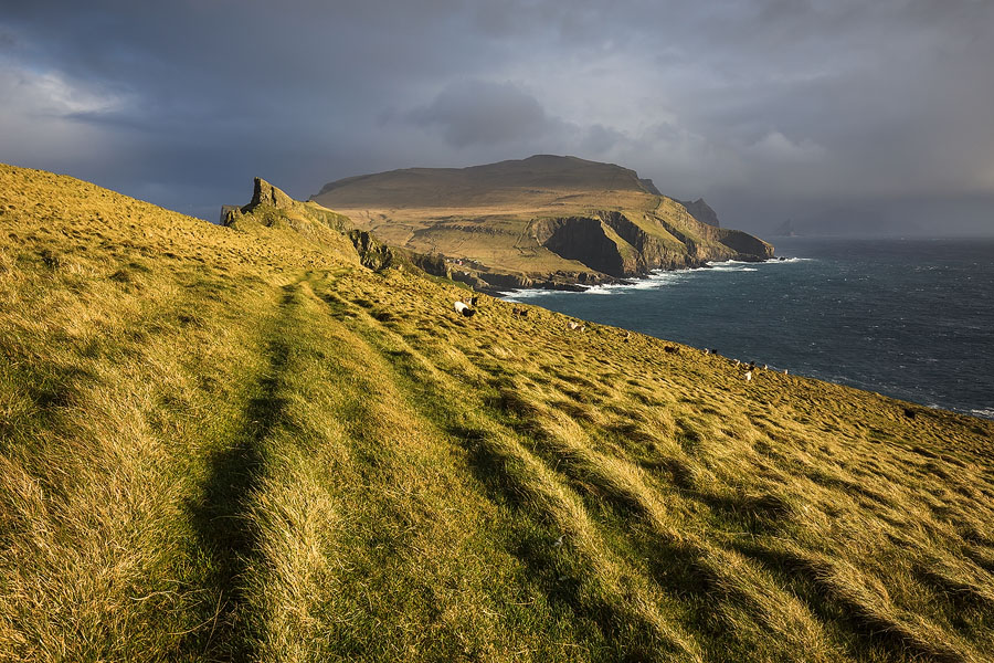 Sun shines on the wind-stricken grass fields of Mykines