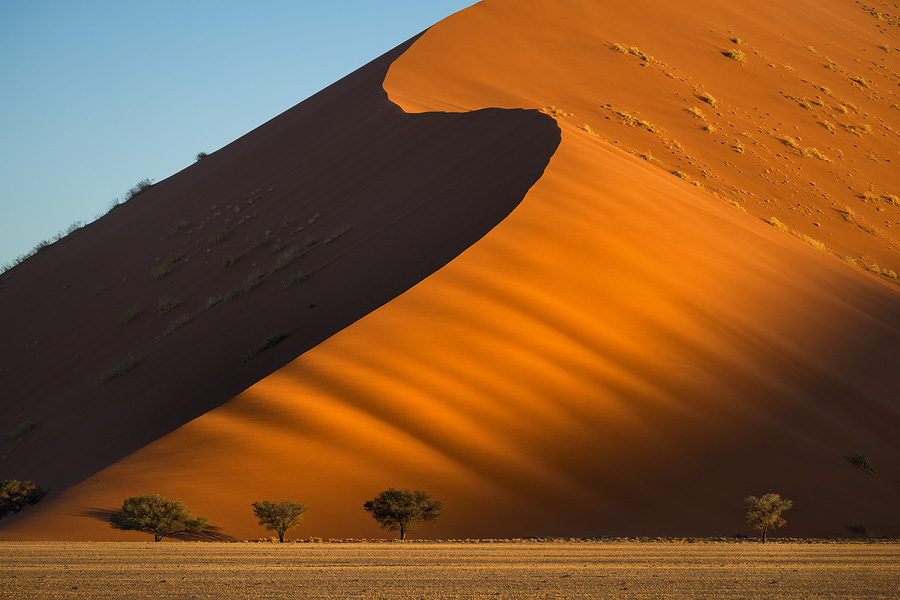 A towering dune casts a shadow on another. The full-sized trees can convey the immensity of these dunes, the tallest in the world